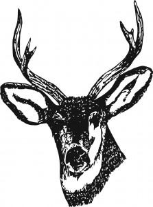 deer-307438_1280